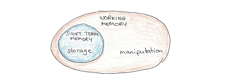 Working Memory  A Complete Guide To How Your Brain